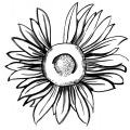 734-artur-bodenstein-carolineseidler-post-sonnenblume