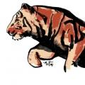 743-artur-bodenstein-carolineseidler-tiger