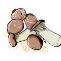 891-artur-bodenstein-carolineseidler-maxima-kraeutersaitlinge
