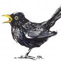 Artur_Bodenstein_carolineseidler_com_bird