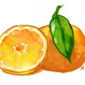 1168-artur-bodenstein-carolineseidler-maxima-mandarine