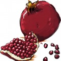 1258-artur-bodenstein-carolineseidler-granatapfel