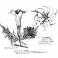037-kerstin-lu-carolineseidler_Sketchbook_5