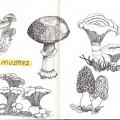 041-kerstin-lu-carolineseidler_Sketchbook_9