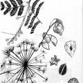 832-kerstin-lu-carolineseidler-skbook_pflanzen_1