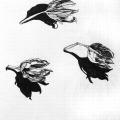 834-kerstin-lu-carolineseidler-skbook_samenschatten_1