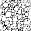 882-eva-vasari-carolineseidler-pattern