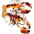 155-Maria-Ruban_carolineseidler.com_food