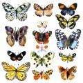 008-mariczka-ruban_carolineseidler-com_flora_fauna