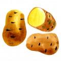 Maria_Ruban_carolineseidler_com_Hofer_Kartoffel