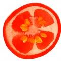 Maria_Ruban_carolineseidler_com_Hofer_Tomate1