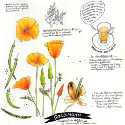 Flora, Fauna / Pflanzen, Tiere